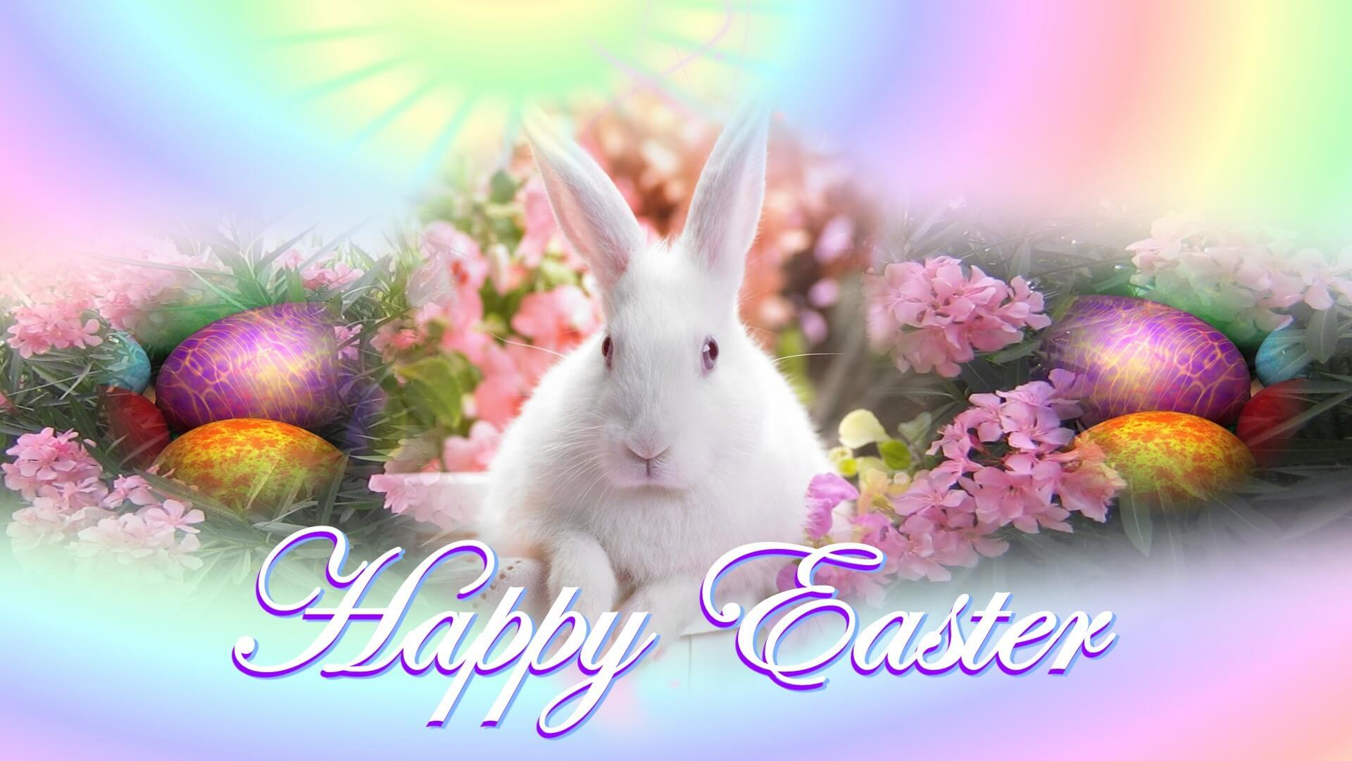 happy-easter-bunny-hd-wallpapers